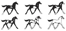 Patrons et codes couleurs chevaux Pinto ovéro